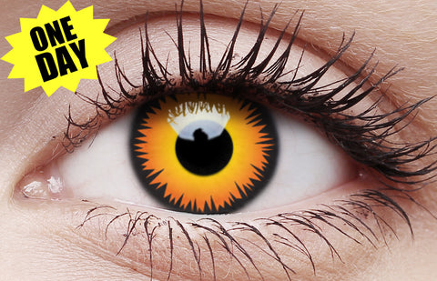 Crazy One-Day Contact Lens Orange Wolf