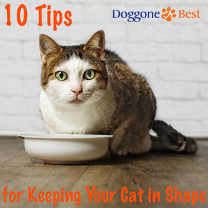 Ten Tips for Keeping Your Cat in Shape