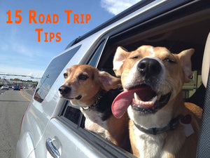 HOW TO ROAD TRIP WITH YOUR DOG: 15 PRACTICAL TIPS