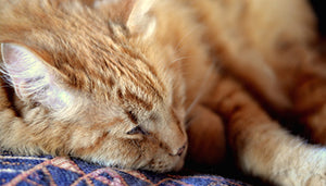 Tips for Caring for Senior Cats
