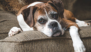 15 Ways to Help Ease Your Dog into the Senior Years