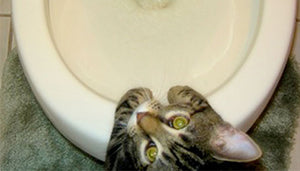 5 Signs Your Cat Has Urinary Tract Disease