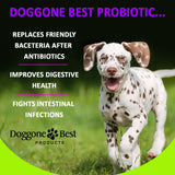 Advanced Probiotic for Dogs