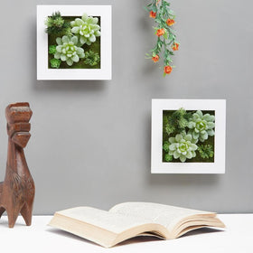 Succulant Wall Planter