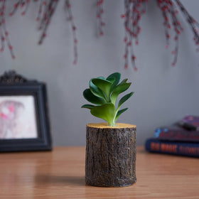 Set of Mini Log Plants