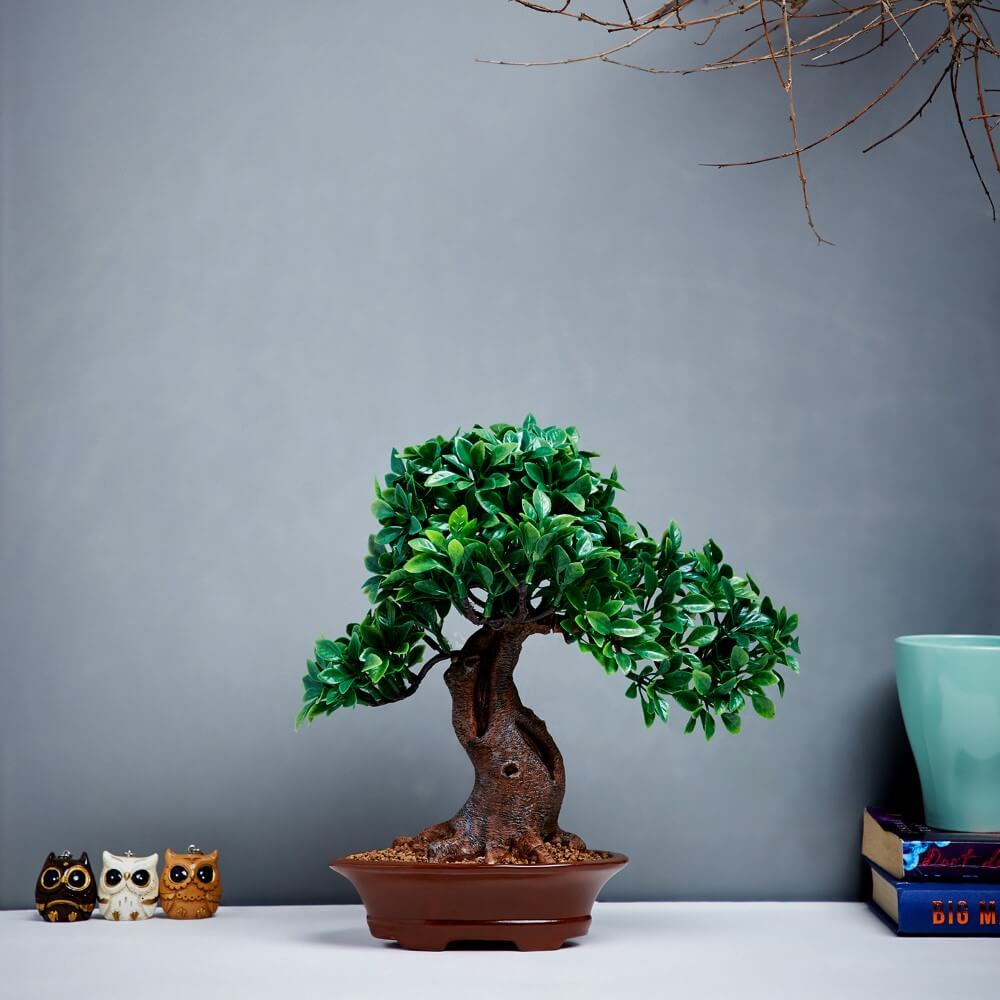 Potted Bonsai Tree