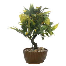 Gardenia Bonsai Tree- Yellow