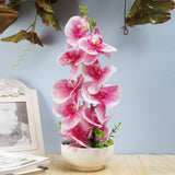 Pink Vanda Orchid Flower Arrangement