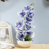 Blue Vanda Orchid Flower Arrangement