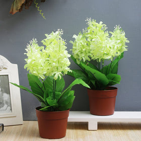Set of Yellow Hyacinth Flower Pots