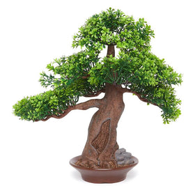 Green Bonsai Tree