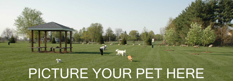 PICTURE YOUR PET HERE