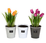 Metal Herbs Planters - Set of Three in Assorted Colors