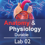 Anatomy & Physiology Lab 02: Autopsy, Surgery, & Suturing - Durable