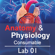 Anatomy & Physiology Lab 01: Anatomical Language - Consumable