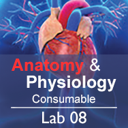 Anatomy & Physiology Lab 08: The Skeletal System - Consumable