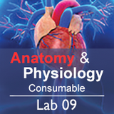 Anatomy & Physiology Lab 09: The Muscular System - Consumable