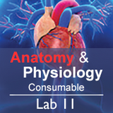 Anatomy & Physiology Lab 11: The Nervous System - Consumable