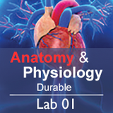 Anatomy & Physiology Lab 01: Anatomical Language - Durable