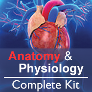 Anatomy & Physiology Basic Kit