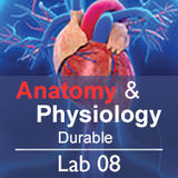 Anatomy & Physiology Lab 08: The Skeletal System - Durable