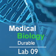 Medical Biology Lab 09: Carrying Capacity  - Durable
