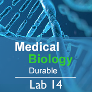 Medical Biology Lab 14: Biodiversity and Health - Durable
