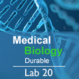 Medical Biology Lab 20: Evidences of Evolution  - Durable