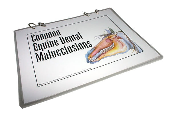 Equine Dental Malocclusions - Flip Chart Series - Equine Dental Instruments