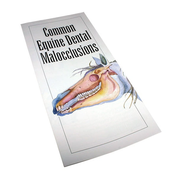 Common Equine Dental Malocclusions - Pamphlet - Equine Dental Instruments