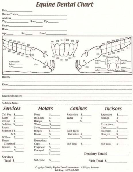 Equine Dental Chart - Equine Dental Instruments