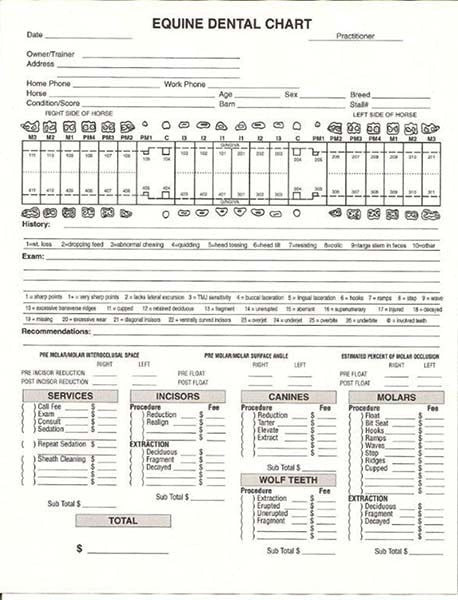 General Dental Invoice / Chart - Equine Dental Instruments