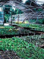 Photo of sales greenhouse filled with plants