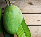 Moisturizer - Purifying Neem and Mango