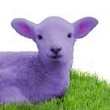 Load image into Gallery viewer, Purple Lamb: Cashmere Sock