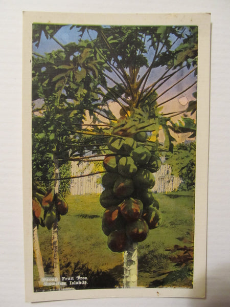 Papia Fruit Tree Hawaiian Islands Pub by the Island Curio Co Honolulu, T.H. CIY Postcard, FREE SHIPPING