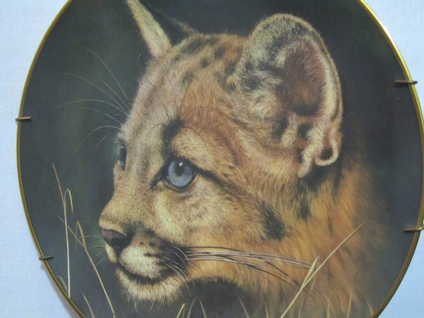 Cougar Cub by, Qua, from the Cubs of the Big Cats Plate Collection, Princeton Gallery, Limited Edition, Fine Porcelain, Wild Cats, Big Cats