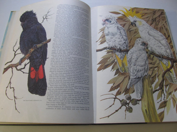 Australian Birds, by Robin Hill, large Hardback, Bird Books, ornithology, bird study, free shipping