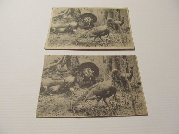Turkeys, cabinet card, postcard, vintage paper ephemera, FREE Shipping