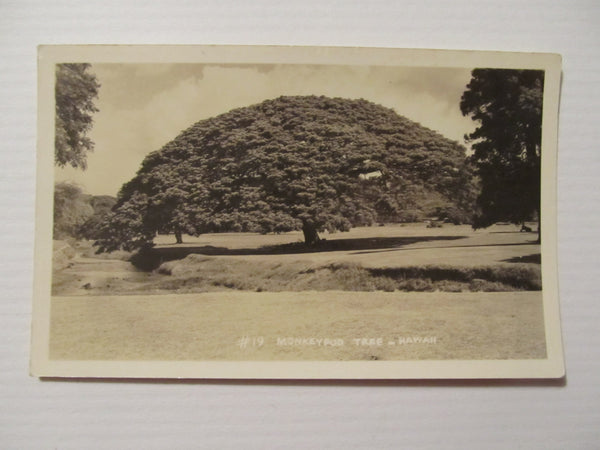 Monkeypod Tree - Hawaii Postcard, FREE SHIPPING