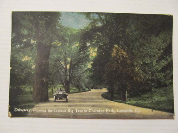 Famous Big TREE in Cherokee Park, Louisville Ky. Postcards, FREE SHIPPING