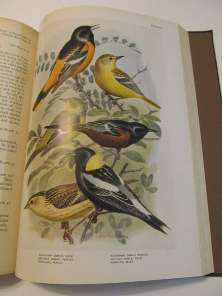 the Birds of Florida Harold H Bailey, c1925 Privately Published for the Author, Book on Birds
