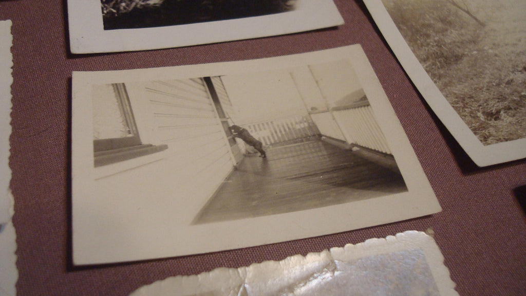 Lot of 14 Antique Dog Photos