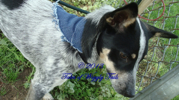 Jean Bandana Dog Collar Cover -  Handmade Upcycled