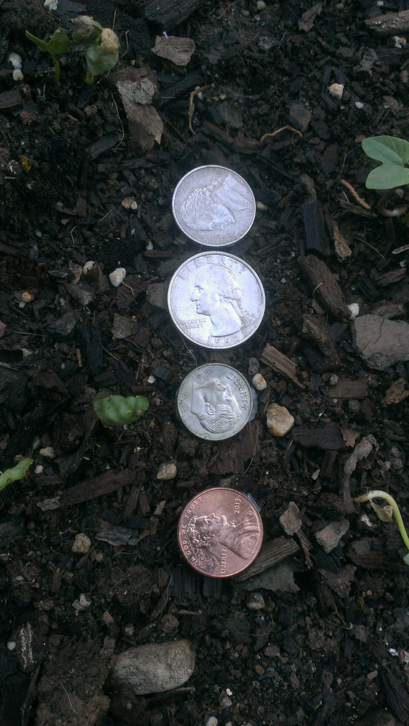 LOOSE CHANGE, Lot of Four Coin Geocaches - Urban Hide, Quarters, Dimes, Nickles, Pennies