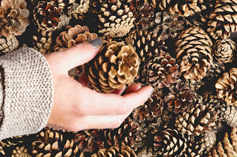Cleaning Pine Cones for Crafts , Is this Necessary?