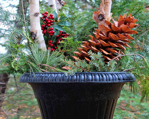 The Search for Giant Pine Cones and a Holiday Urn for All Seasons