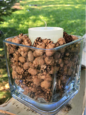 hemlock cones  fillers in home decor