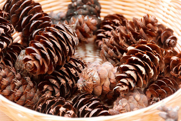 pine cones for sale online