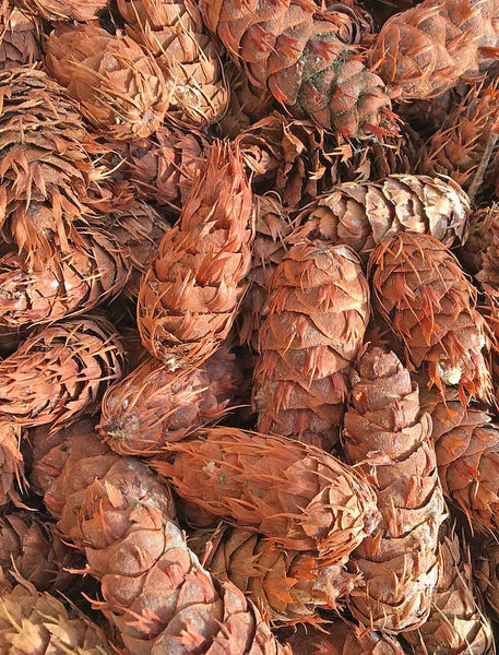 wholesale pine cones